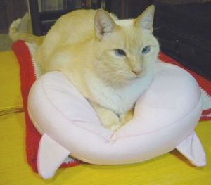 Rascalbear sitting pretty on his kitty pillow.